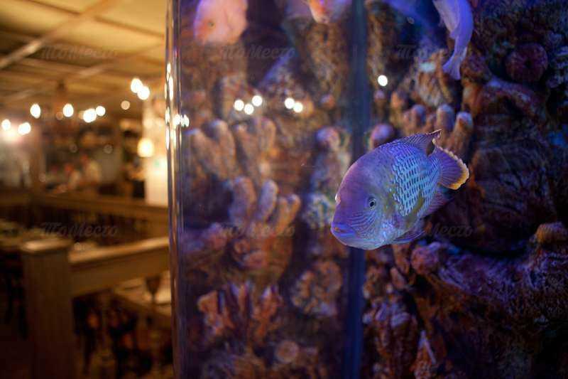 Меню ресторана Паприколли (бывш. Спайси) на улице Красина