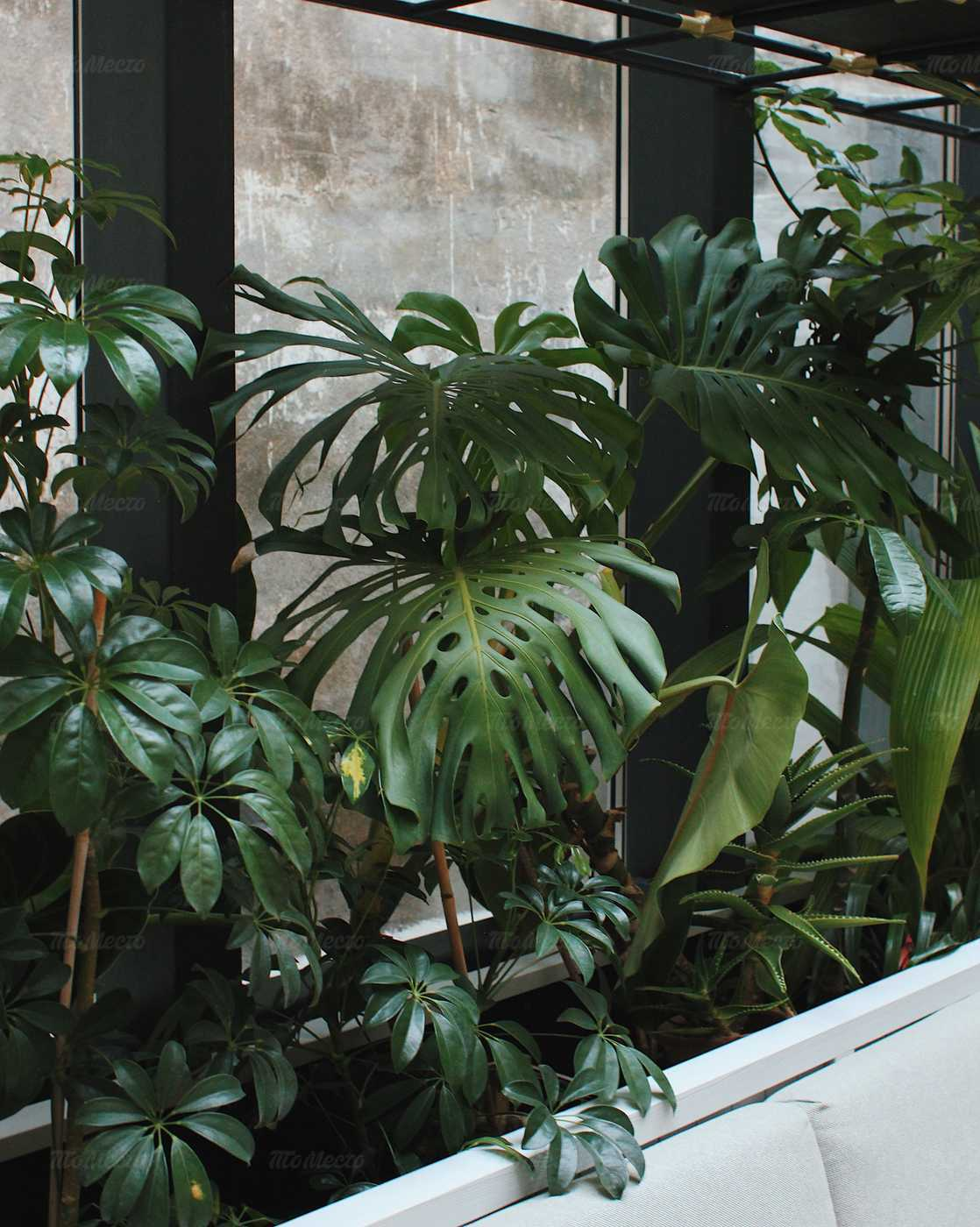 Кафе Jungle (Джунгли) на набережной канала Грибоедова фото 10